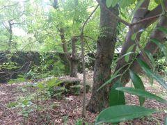 Terreno en Ticuman, Tlaltizapan.